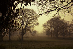 Early morning, golden mist, silhouettes of leafless trees Stock Photos