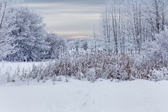 An Early Morning With Heavy Hoar Frost Royalty Free Stock Image