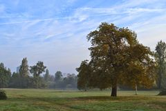 Early morning Hyde Park London. Early morning in Hyde Park, London with first signs of autumn Royalty Free Stock Photos