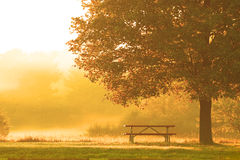 Early Morning In The Park Royalty Free Stock Photos