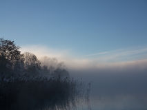 Early Morning Lake Reeds with Fog Stock Photography