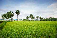 Early morning landscape with palm trees Royalty Free Stock Photography