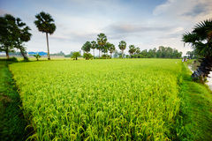 Early morning landscape with palm trees Stock Photography