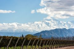 Andes mountain range, in the Argentine province of Mendoza. Early morning in the late autumn: Volcano Aconcagua Cordillera and Vineyard. Andes mountain range, in stock images