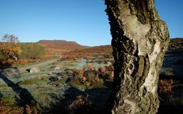 Early morning trees and frost hathersage moors royalty free stock photography