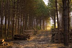 Early Morning On A Logging Road Royalty Free Stock Images