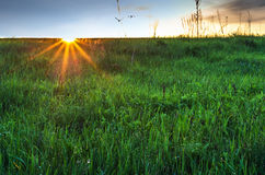 Early morning meadow with sun beams. Grass with dew on meadow in sunrise beams Royalty Free Stock Image