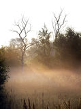 Early morning mist Stock Photography