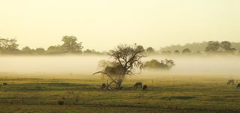 Morning mist in the pasture of the farm Stock Photos