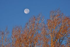 Early Morning Moon Stock Photography