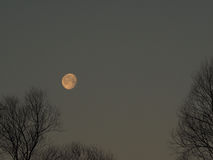 Early morning moon Royalty Free Stock Image