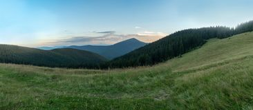 Early morning in mountain pasture at summer. Nature panoramic landscape. Carpathians mountains in august, west Ukraine. Hillsides covered with dense forest of royalty free stock images
