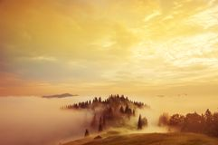 Early morning in the mountains. The top of the hill with the fir trees in the fog. Soft sunlight. A magical misty morning in the summer in the mountains Royalty Free Stock Photography