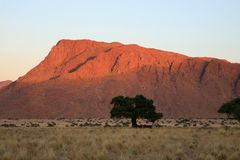 Early morning in Namibia Royalty Free Stock Photography
