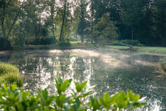 Early morning nature scene of pond and trees in park Royalty Free Stock Photos