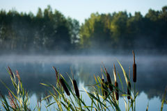 Early morning near the lake Royalty Free Stock Images