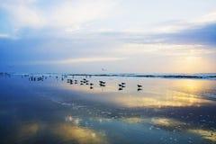 Early morning at ocean beach Royalty Free Stock Photo