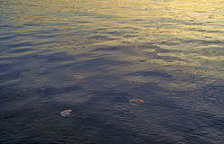 Early morning ocean with small chunks of floating ice Royalty Free Stock Photos