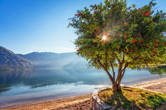 Free Early Morning On The Beach Royalty Free Stock Photography - 26404387
