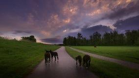 Free Early Morning On The Farm Stock Photos - 181609383