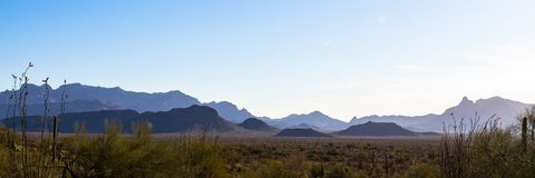 Wide panorama at dawn of Organ Pipe Cactus National Monument in southern Arizona. Early morning in Organ Pipe Cactus National Monument in southern Arizona`s Royalty Free Stock Image