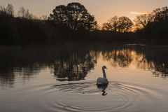 Early morning on the Ornamental Pond, Southampton Common royalty free stock photos