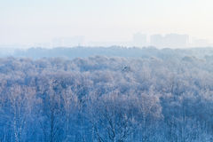 Early morning over frozen forest and city Royalty Free Stock Photography