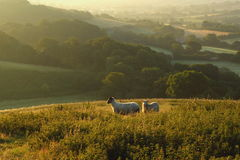 Early morning over Marshwood Vale Royalty Free Stock Images