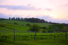 Early morning over vineyards Royalty Free Stock Photo