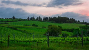 Early morning over vineyards Stock Photography