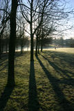 Early Morning Parkland. Atmospheric contre jour parkland scene taken early winter morning trees starkly in silhouette Royalty Free Stock Photos