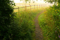 Early morning path Royalty Free Stock Photo