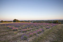 Early morning in the Provence Royalty Free Stock Image