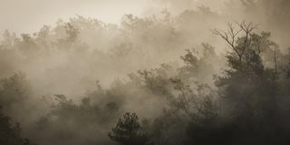 After the rain a mysterious mist envelops the forest. In the early morning and after rain a mysterious mist envelops the forest Royalty Free Stock Images