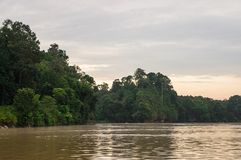 Early morning rainforest along the Kinabatangan River, Sabah, Bo. Rneo. Malaysia royalty free stock images
