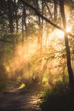 Early morning rays of sun shine through the trees and mist onto stock photo