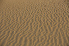 Early morning ripples in the desert sand Royalty Free Stock Image