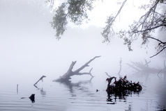 Early morning river covered with gray mist Stock Photo