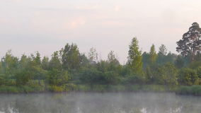 Early morning on the river with a lone tree and moving fog. Panoramic shot of the early morning on the river with a lone tree and moving fog stock footage