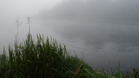 Early morning river water flow in misty fog and shore flora stock footage
