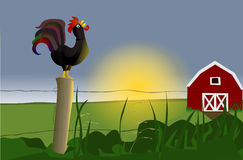 Early morning rooster. Sunrise: early morning rooster with red barn farmhouse Stock Photo