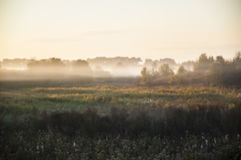 Early morning rural landscape with fog. Tree and field Stock Photo