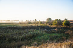 Early morning rural landscape with fog. Tree and field Royalty Free Stock Images