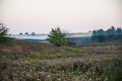 Early morning rural landscape with fog Stock Photography