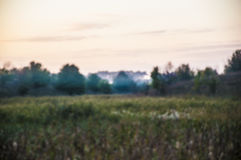 Early morning rural landscape with fog. Tree and field stock photography