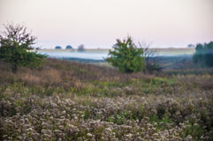 Early morning rural landscape with fog. Tree and field Royalty Free Stock Photography