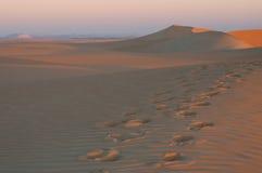 Early morning in Sahara desert in Egypt stock photo