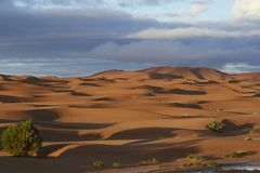 Early Morning in the Sahara Royalty Free Stock Photography