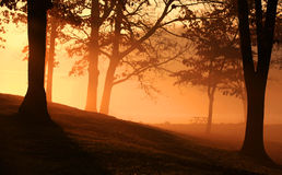 Early morning scene Royalty Free Stock Photo
