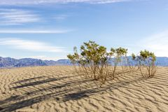 Early Morning in Mesquite Sand Dunes stock image